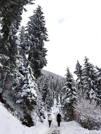 snow walker My