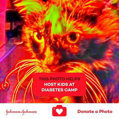 Kali in red special effects long hair cat calico Donate And Change A Life Johnson & Johnson Donate To Help Jonhson And Johnson Donation Collection Donation = Sharing Special Effects Adopt To Save A Life No People Calico Cat Cat Photography Calico Cats Are Special Cat Collection Close-up
