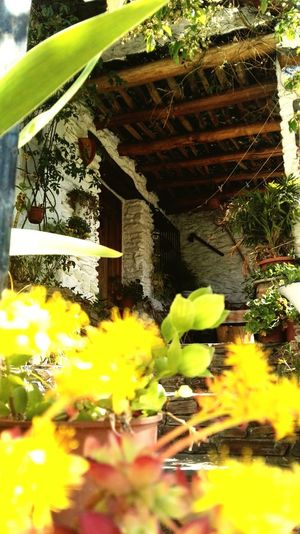 Flower Built Structure Architecture Greenhouse Outdoors Nature Weekend Alpujarra Granada Family❤ Day Granada The Secret Spaces