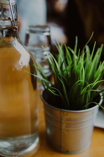 Plants and Bottle of water Close-up Food And Drink Freshness Indoors  No People Healthy Eating Table Food Day Cleantable Plants 🌱 Potted Plant EyeEm Gallery EyeEm Best Edits Market