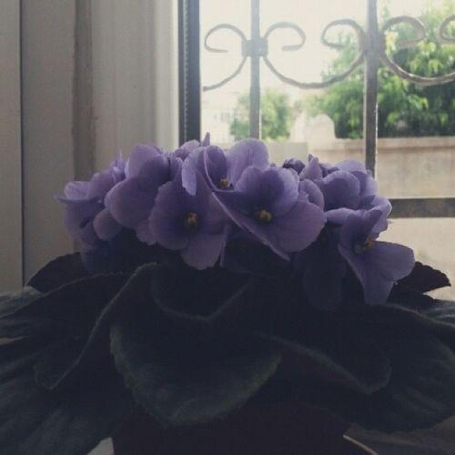 Babannemin gözü gibi baktıkları. Kadını çiçeklerden kıskandığım doğrudur. ^^