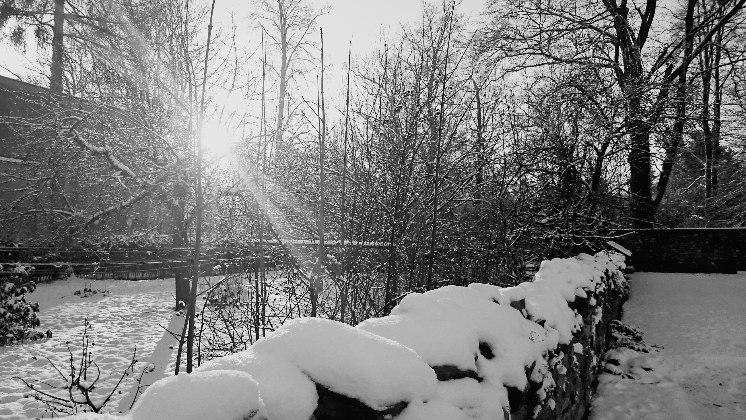 snow, winter, cold temperature, bare tree, season, frozen, tree, nature, tranquility, weather, covering, tranquil scene, branch, sunlight, sky, sun, beauty in nature, wood - material, scenics, fence