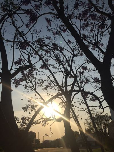 Tree Sunset Sun Nature Sky Silhouette Beauty In Nature Branch Scenics Sunlight No People Tranquility Low Angle View Outdoors Growth Sunbeam Day EyeEmNewHere