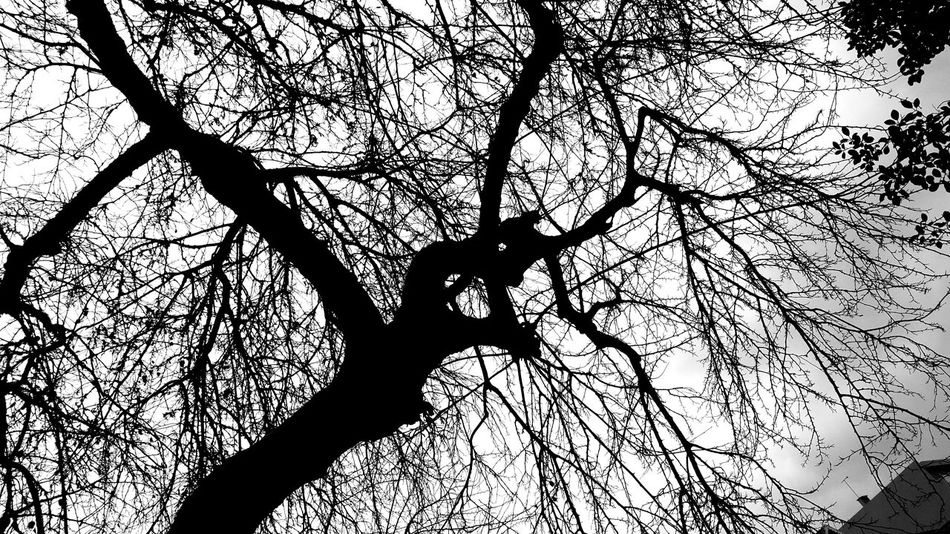 B&w Street Photography Pattern Tree Backgrounds Nature Human Body Part Beauty In Nature