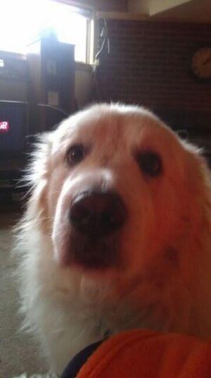 My Dog Nanuke