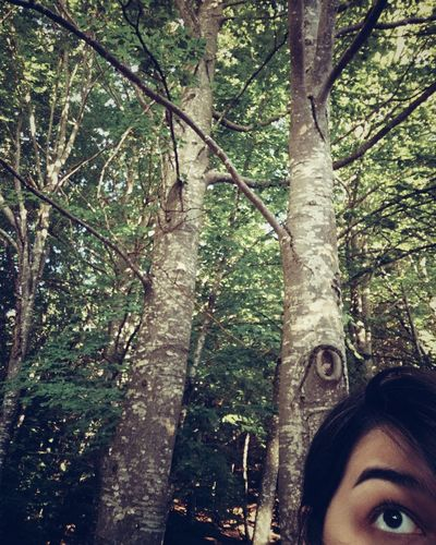 Intruder Wood Wooden Tranquility Tranquiil Scene Myself Sociopath Girl Nature Plant Eyebrow Thegrudge Travel Trip Path Tree Branch Portrait Young Women Smiling Human Eye Looking At Camera Headshot Tree Trunk Close-up Lush Foliage Green Woods Young Plant Forest