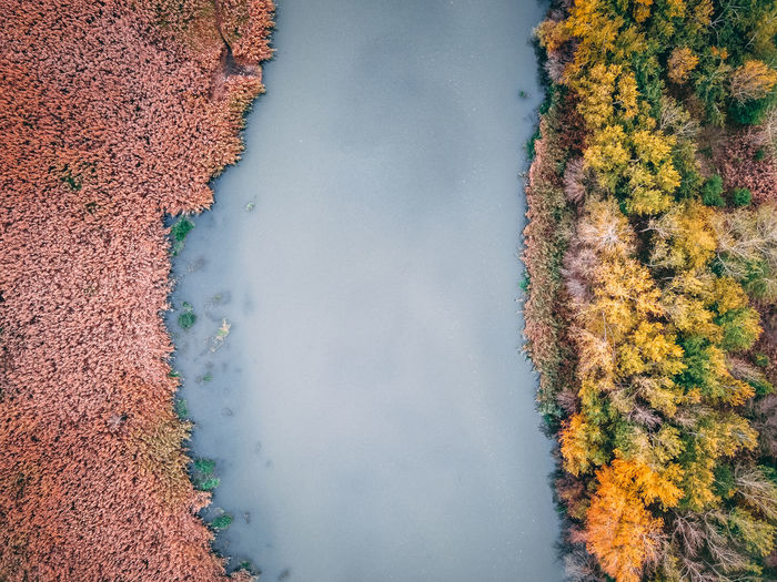 High angle view of autumn trees by lake