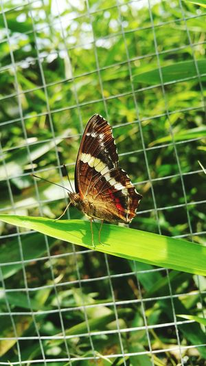 Insect One Animal Animal Themes Animals In The Wild Nature Animal Wildlife No People Leaf Close-up Day Plant Butterfly - Insect Outdoors Beauty In Nature Perching Fragility Focus On Foreground Spider Web Butterfly Butterfly Collection Butterflies Butterfly ❤ Mariposa Mariposas