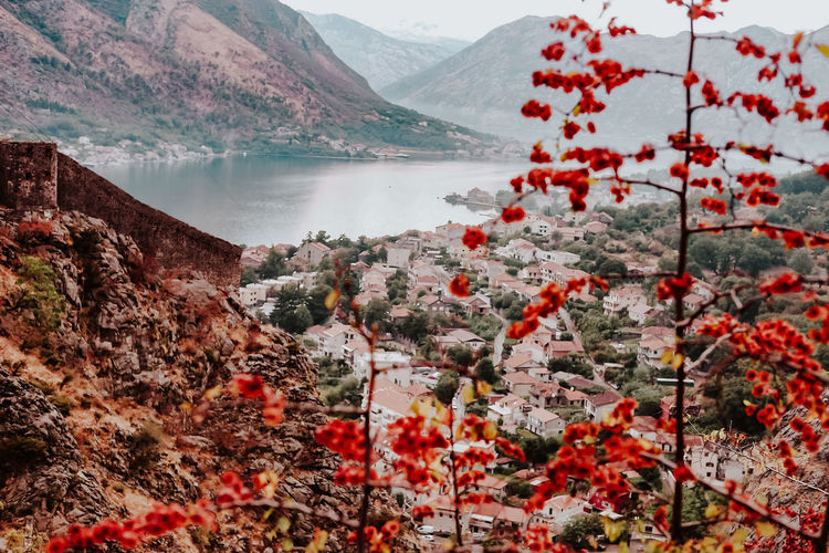 Kotor, Montenegro Nature Day Outdoors Mountain Water Beauty In Nature Scenics - Nature Plant Lake Mountain Range Tranquility Tranquil Scene No People Autumn Environment Sky Growth Flower Flowering Plant Change Mountain Peak