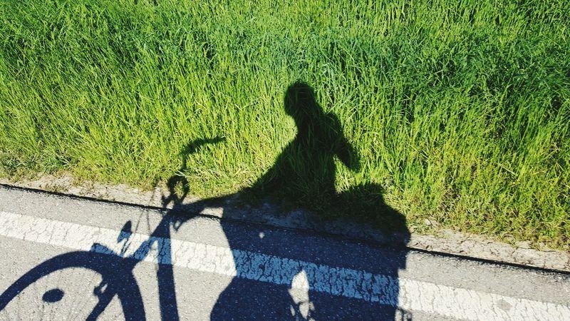 Bysicle Summerday Shadow Schattenspiel  Radtour