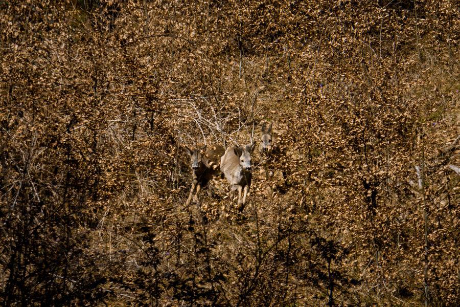 Bambi and friends Austria Spring Springtime Sunlight No People Outdoors EyeEm EyeEm Nature Lover Nature Bambi Deer Animals In The Wild Animal Wildlife Animal Forest Eyemphotography Eyem Best Shots Horned
