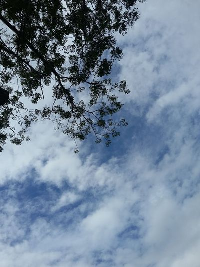 Tree Sky And