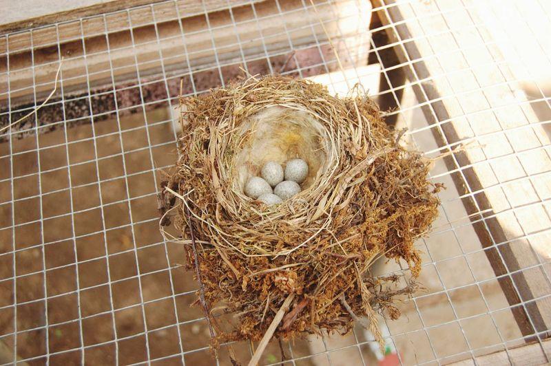 Nest Eggs...