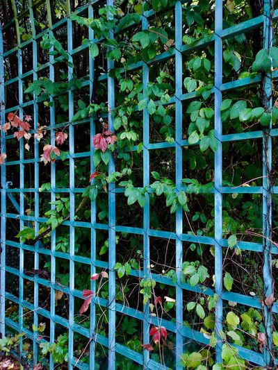 """Nearby """"The end of the world ... """" Autumn Blue Espalier Close-up Day Flower Fragility Growth Historical Garden Leaf Nature No People Outdoors Plant Red Leaves Romantic Site"""