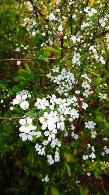 Yeah Springtime! Flower 봄 일상 꽃 Gpro2 Daliy Snap Spring