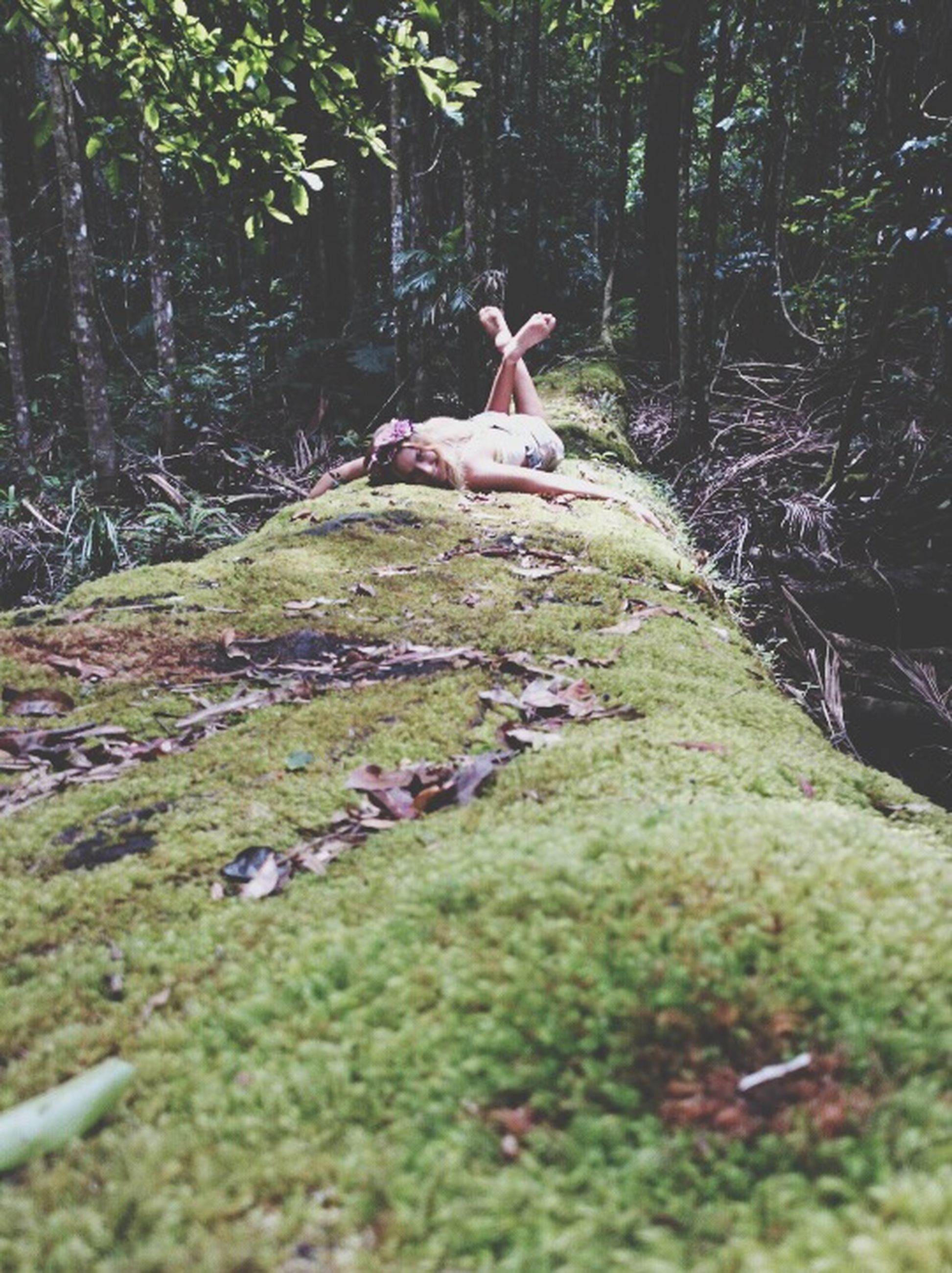 tree, forest, animal themes, bird, animals in the wild, wildlife, nature, tranquility, tree trunk, green color, beauty in nature, growth, tranquil scene, day, grass, one animal, outdoors, water, full length, no people