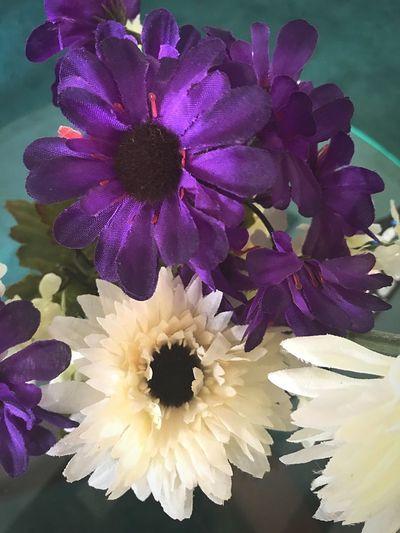 Flowering Plant Flower Plant Petal Freshness Fragility Vulnerability