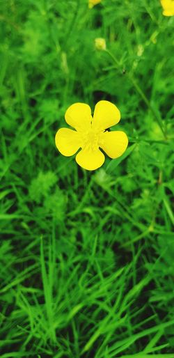 Flower Head Flower Yellow Happiness Summer Close-up Grass Plant Green Color