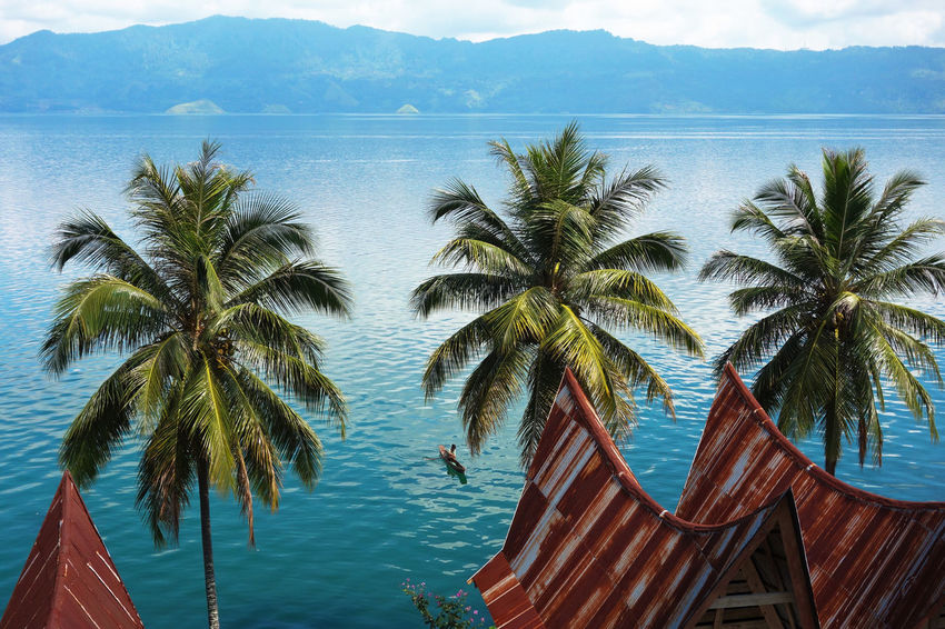 Sumatra  Toba Lake Beauty In Nature Clear Sky Day Horizon Over Water Nature No People Outdoors Palm Tree Scenics Sea Sky Tranquil Scene Tranquility Tree Water