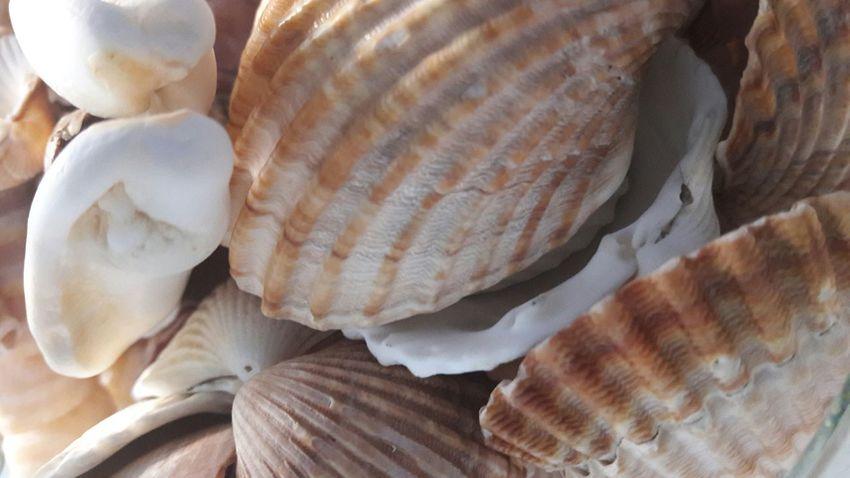 Sea Life Shells Sea_collection Arroyo De La Miel Spain🇪🇸