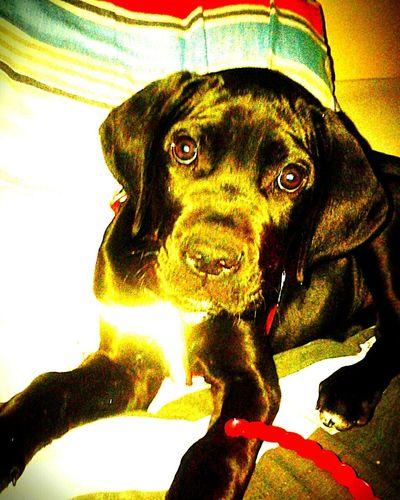 Cute Pets Cute♡ Cute Dog