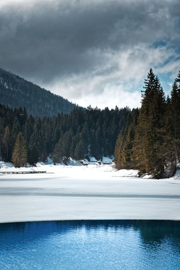 Snow Covered Pine Trees By Lake Against Sky