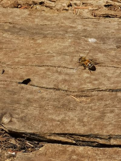 High angle view of bee on wood