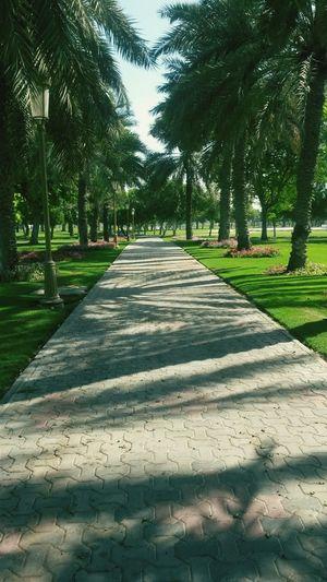 Greenbelt Ladies Park Sharjah Uae Peaceful Morning Beauty In Nature Relaxing Breathtaking View Enjoying Life