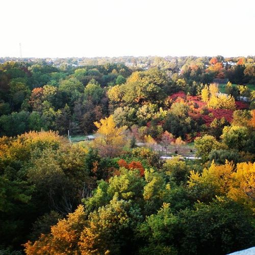 There's so much colour in the sky come fall, you almost forget the reminder that winter is near. Travel Nature Beautiful Pretty fall tree green red skypainters mothernature ladd00 scenery landscape canada explorecanada travelcanada Ontario on toronto yyz