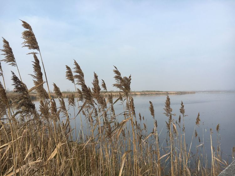 Am Federsee Sky Plant Tranquility Growth Beauty In Nature Nature Tranquil Scene Lake Grass Land Scenics - Nature No People Outdoors Water