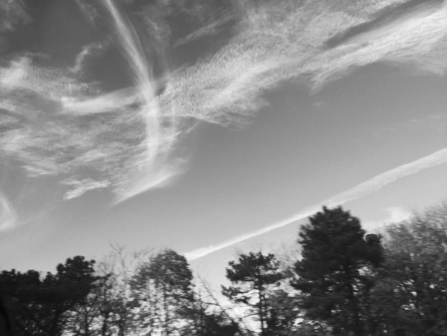 Infinite space but not enough time to fill up the space Tree Low Angle View Nature No People Beauty In Nature Growth Day Outdoors Vapor Trail Sky