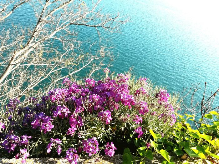 Duino Beach Garden By The Bay Outdoors, Nature Flowers, Nature And Beauty Sea And Trees Garden By The Ocean Adriatic Sea Duino Castle Trieste