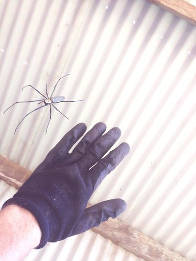 Little Bird eating Spider. Australia Queensland Australia Farm Working Hard
