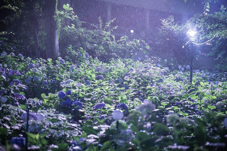 雨というか風も強くて嵐のような一日でしたな。 Plant Tree Beauty In Nature Nature Day Land Forest Growth No People Tranquility Flower Selective Focus Flowering Plant Tranquil Scene Outdoors Freshness Scenics - Nature Water Sunlight Purple