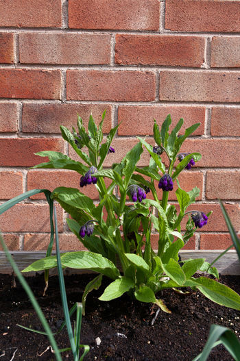 Potted plant against brick wall