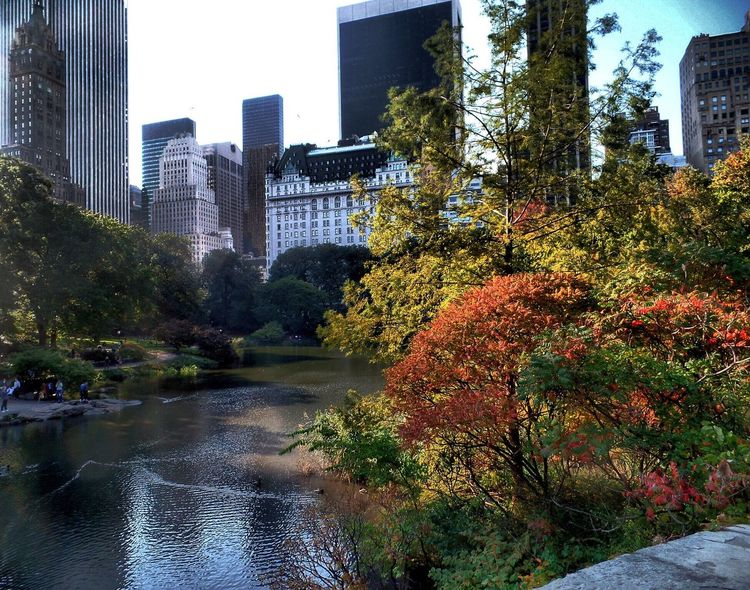 Central Park Fall Skyscraper Architecture Water Autumn Beauty In Nature Cityscape Building Exterior Tree Reflection Nature Outdoors Modern Adapted To The City Scenics Day EyeEm Nature Lover No People City Cityscapes Sky Serenity NYC