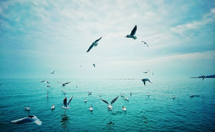 Seagulls flying above sea