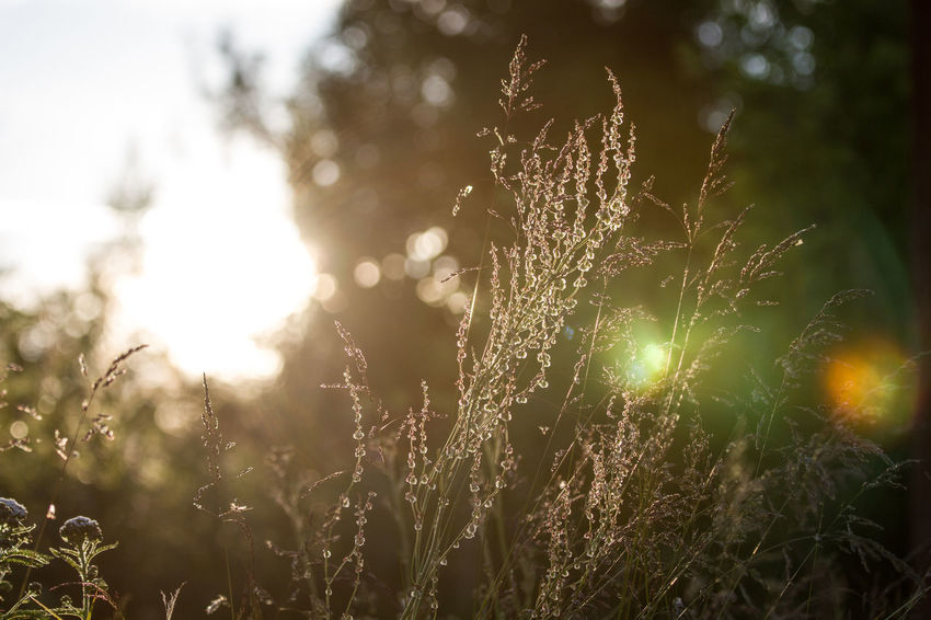 Beauty In Nature Close-up Day Field Focus On Foreground Fragility Freshness Grass Growth Nature No People Outdoors Plant Sky Sun Sunlight Tranquility