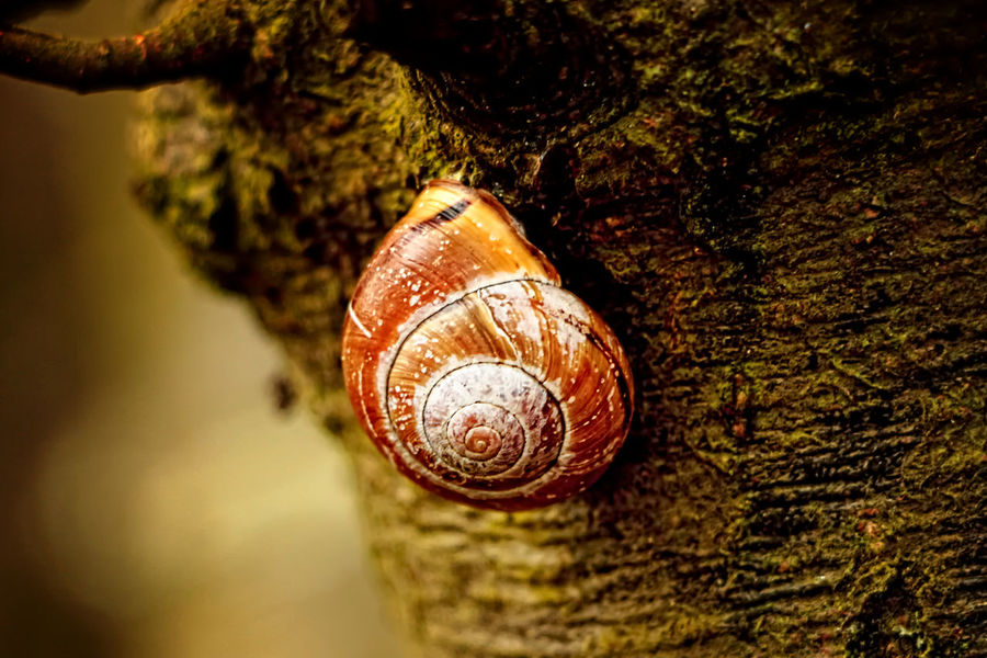 Animal Shell Animal Themes Animal Wildlife Animals In The Wild Beauty In Nature Close-up Colorful Colors Day Eye4photography  EyeEm Best Shots EyeEm Nature Lover Fragility Gastropod Nature No People One Animal Outdoors Snail Taking Photos Textured  The Great Outdoors - 2017 EyeEm Awards Tree Wildlife