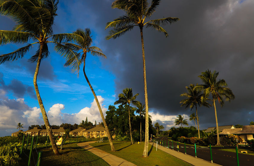 Stormy sunset on Princeville Hawaii Rain Road Storm Way Of Life Beauty In Nature Black Clouds Cloud - Sky Condominium Nature Outdoors Palm Trees Princeville Saturated Colours Scenics Sky Tourism Tranquil Scene Tranquility Travel Destinations Tree Tree Trunk