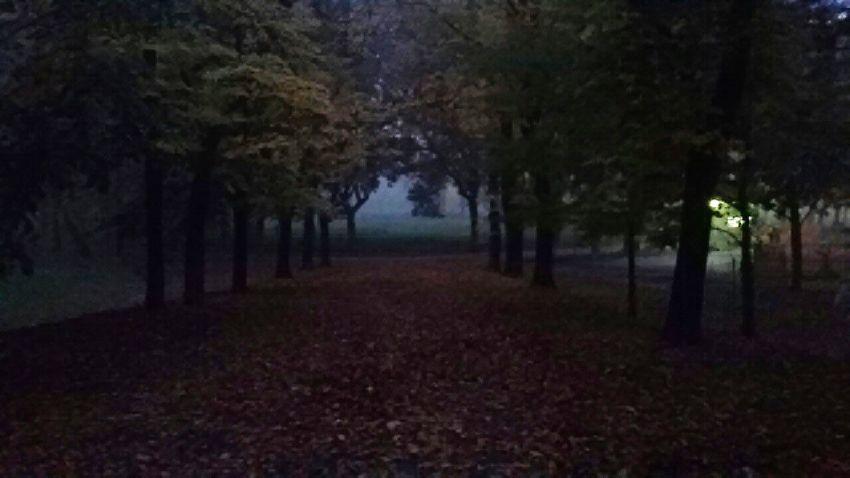 Cittadella Parma Fog Woods