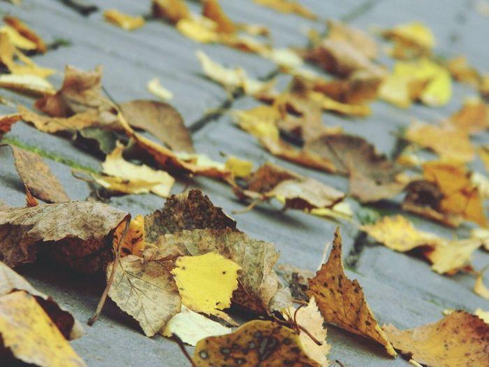осень листья листья желтые листьяофигенные осень прекрасна 🌾🍂🍃 Осень2016