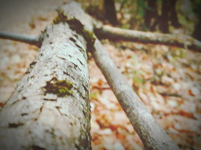 Tree Trunk Tree Close-up Wood - Material Focus On Foreground Textured  Selective Focus Nature Moss Green Growth Day Outdoors Weathered No People Surface Level