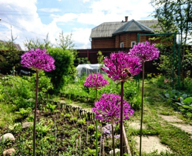 Village Summer Sun Flowers Nature
