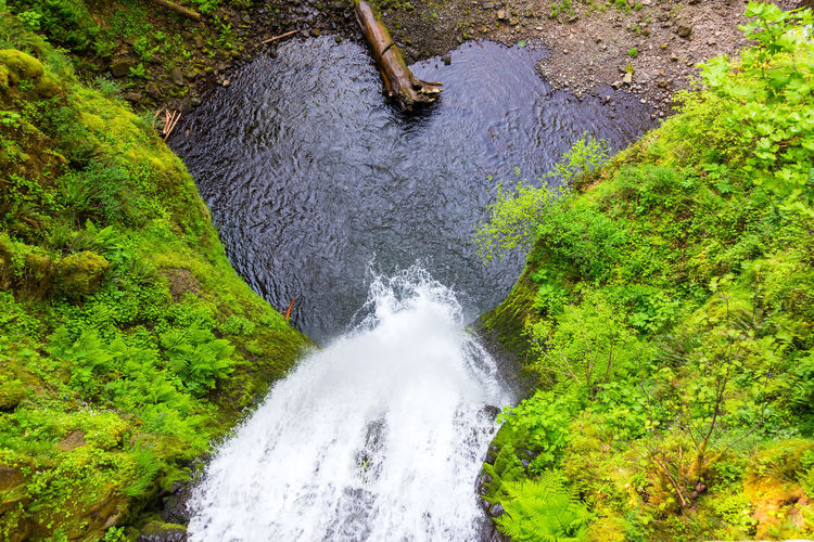 Looking down on Multnomah Falls in the Columbia River Gorge in Oregon Columbia River Gorge Gorge Green Green Color High Angle View Landscape Motion Multnomah Multnomah Falls  Nature Northwest Oregon Pacific Northwest  Tourism Travel Travel Destinations USA Water Waterfall