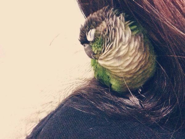 rainy day nap ?? Animals Birds Conure Greencheekconure