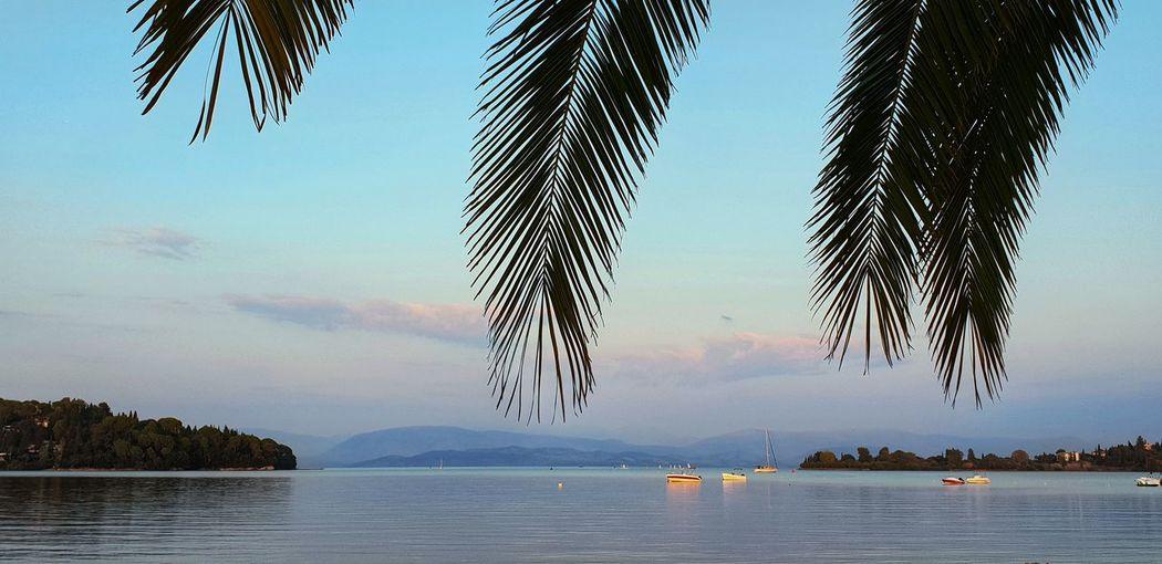 Gouvia Palm Tree Palm Leaf Beach Blue Hour Sea Malephotographerofthemonth Greece Corfu Vacation Destination Tourist Attraction  Nature Tree Water Nautical Vessel Sky Animal Themes