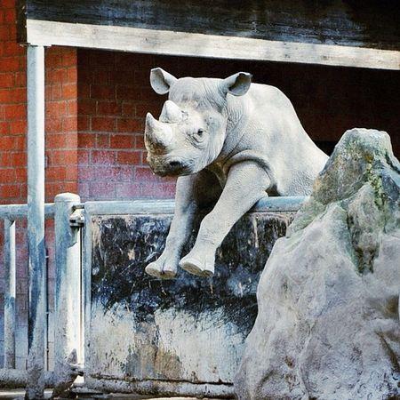 Iwantitsomuch Zoo Krefeld Nashorn rhino