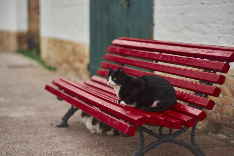 Red and cat sitting on bench