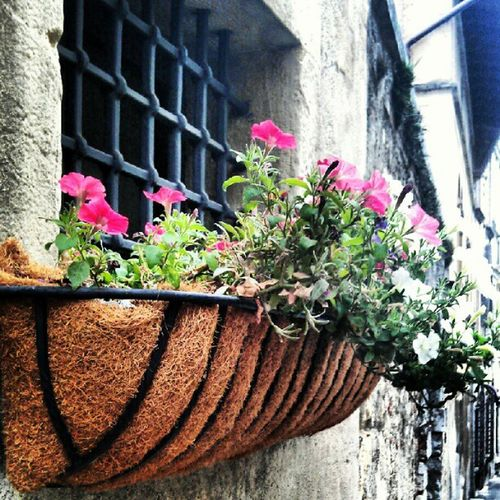 Flowers in the Hay ??? I dont know but i like it! Asolo Italia Italy Treviso wall igers igersitalia instagram